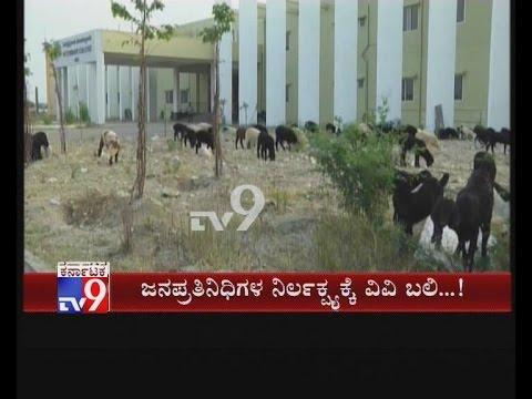 Cattles Attend Gadag Veternary College over Officials Negligence