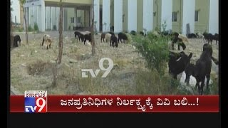 Cattles Attend Gadag Veternary College over Officials Negligence