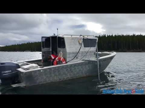 Yellowstone lake trout suppression