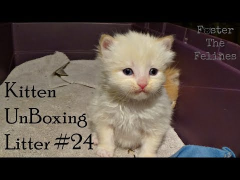 Kitten UnBoxing #24 ~ Bottle Baby Foster Kittens ~ New
