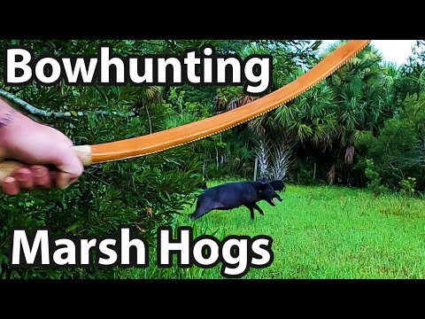 Bow Hunting Hogs On The Marsh
