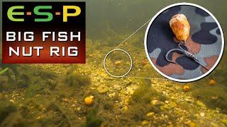 Simple Tiger Nut Rig | Carp Fishing Rigs