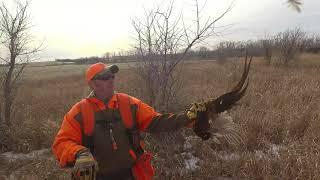 2017 KS Quail & Pheasant Hunting Clips