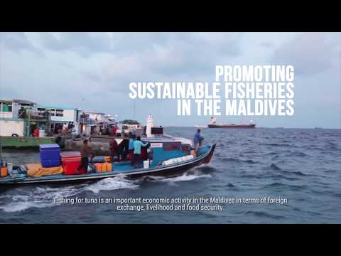 Promoting Sustainable Fisheries in the Maldives