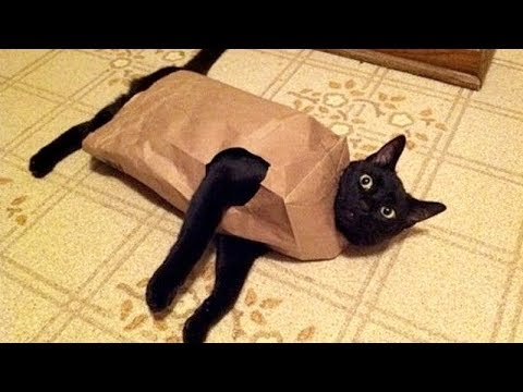 You DON'T WANT TO MISS THIS, TRUST ME! – TRY NOT TO LAUGH at FUNNY ANIMALS