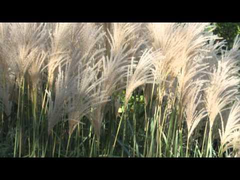 Easy Landscaping Ideas - Ornamental Grass