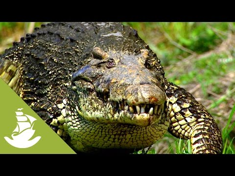 The diet of the Cuban crocodile