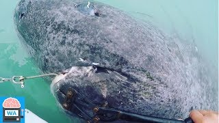 Hai entdeckt der unglaubliche 512 Jahre alt ist!