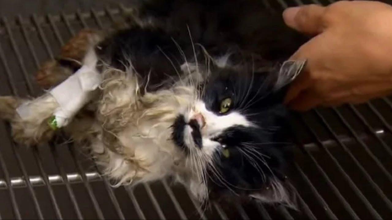 Котёнок несколько часов пролежал в холоде на стройплощадке, не двигался и не дышал
