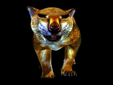 Marsupial Lion - you've never seen anything like! | Storyteller Media