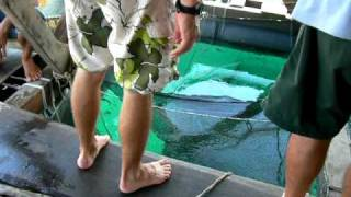 Phu Quoc Island, Boat Trip, Fish Farm N1, Vietnam
