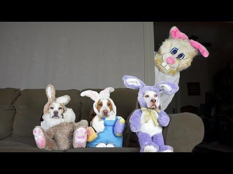 Funny Dogs vs Easter Bunny Prank: Funny Dogs Maymo, Penny, & Potpie