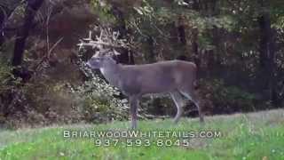 Briarwood Ohio Whitetail Deer Hunts 2014