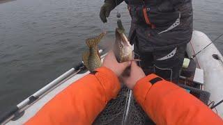 И сново убеждаемся, рыба любит эксперементы с приманками!