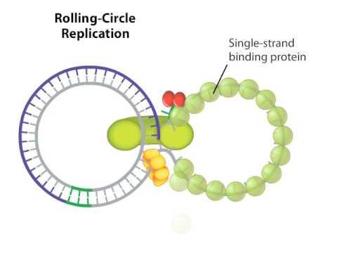 Rolling Circle - YouTu...