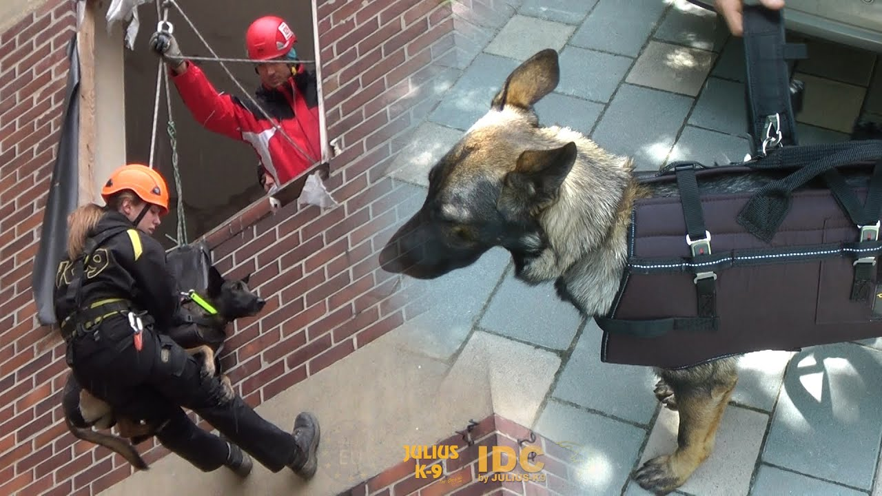 The Repelling Amp Carrying Harness Of Julius K9 Code