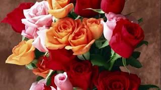 Смотреть клип Андрей Шпехт - А Розы Отцвели