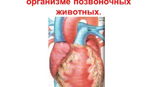 Перенос веществ в организме позвоночных животных