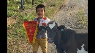 Con bò - Thử thách đá bóng của con bò - Giải trí nhỏ