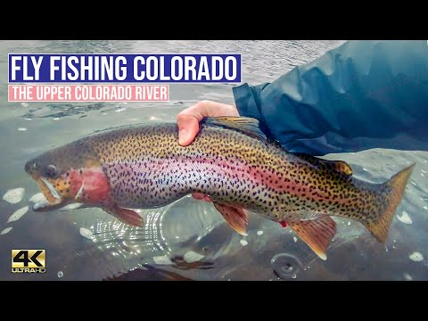 Fly Fishing The Upper Colorado: Attack Of The Big Bows