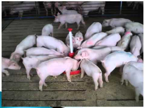 Dr. Bryan Myers - Recognition, Prevention and Control of Swine Diseases
