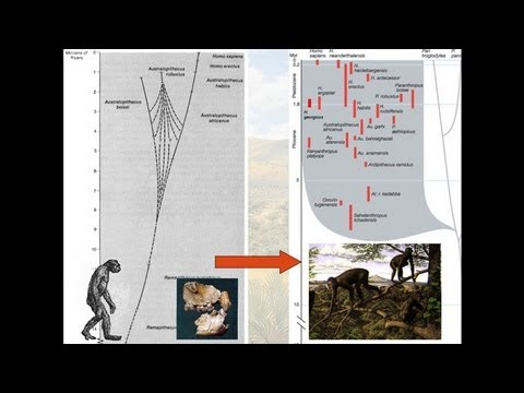 CARTA:Bipedalism and Human Origins--Leslie C. Aiello:Bipedalism and the Evolution of the Genus Homo