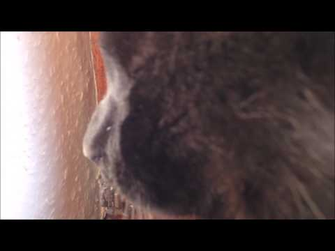 Purring cat  - 1 hour version for relaxation