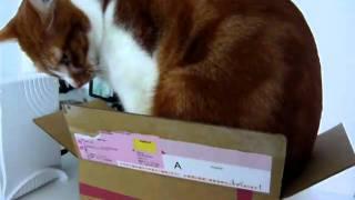 ポコさん、その箱は小さすぎます。。。 http://red.ap.teacup.com/poko2/