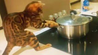 ПРИКОЛЫ С ЖИВОТНЫМИ Смешные Животные Собаки Смешные Коты Приколы с котами Забавные Животные 77