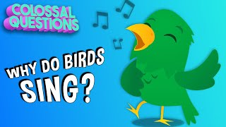 Why Do Birds Sing In The Morning? | COLOSSAL QUESTIONS
