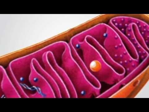 glucolisis proceso catabolico o anabolico