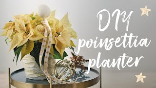 DIY poinsettia planter for Advent: upcycling with plaster