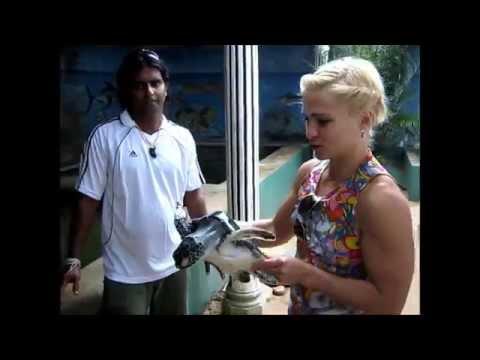 Sri Lanka-fitness, ocean , exotic