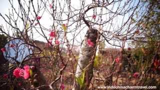 Tet Holiday - Vietnamese Lunar New Year thumbnail
