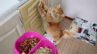 Самый лучший и недорогой корм для кота. Сделай и себе такой сам.