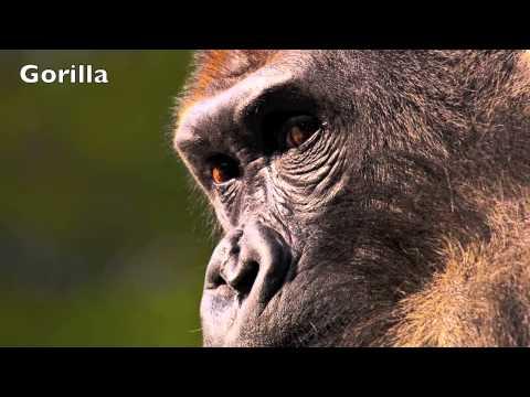 jungle-animal-sounds-for-kids