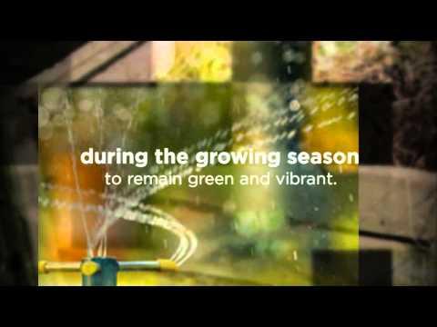 Phoenix, AZ Lawn Maintenance   Expert Organic Lawn Care Tips