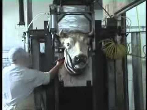 Meet your Meat, the Barbarity of Halal Slaughter