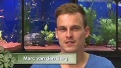 Animalisch Nr. 21 @ Ein 11`000 Liter Aquarium selber gebaut mit Marc van den Berg