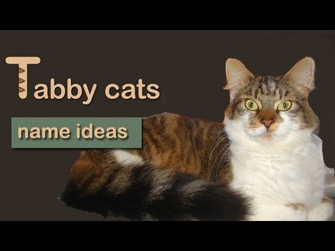 Tabby Cat Names - 25 Names For Your Tabby Cat