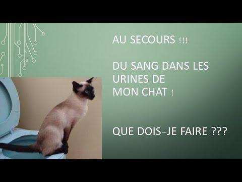 Du Sang Dans Les Urines De Mon Chat ! Au Secours ! Phytothérapie Et Guérison En 24h Chrono !
