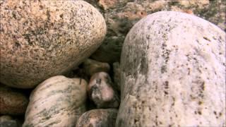 Murya - By The Seaside
