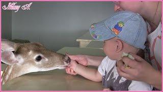 Контактный зоопарк - Лесное посольство!(Всем привет! Меня зовут Мелаша! Мне 7 лет и в этом видео мы ходили в контактный зоопарк - Лесное посольство,..., 2015-08-22T15:16:09.000Z)