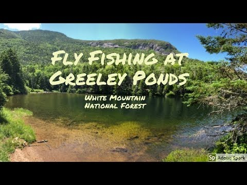 Greeley Ponds Fly Fishing