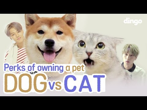 Are You A Dog Person? Or A Cat Person?(Feat. ATEEZ) • ENG SUB • Dingo Kbeauty