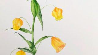 시들지 않는 수채화 꽃그림 / 샌더소니아 / Sande…