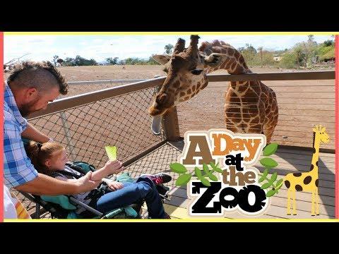 Phoenix Zoo & The Dinosaur Exhibit!