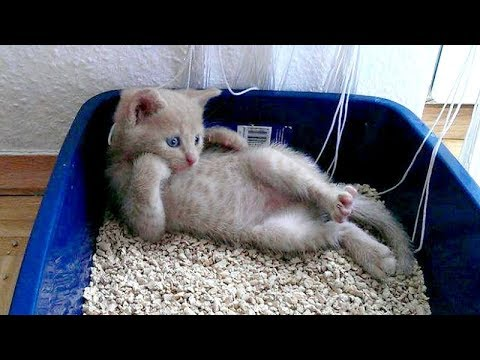 TOP HIGHLIGHTS of CATS that will MAKE YOU LAUGH - Super FUNNY ANIMAL compilation