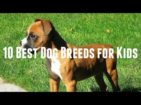 10 Best Dog Breeds for Kids