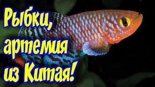 Живые аквариумные рыбки с Алиэкспресс! Приехала посылка с Алиэкспресс и что из этого получилось?)